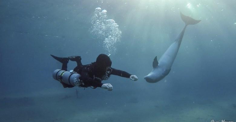 צלילה בקונפיגורצית Side Mount Photo: Omri Harpaz