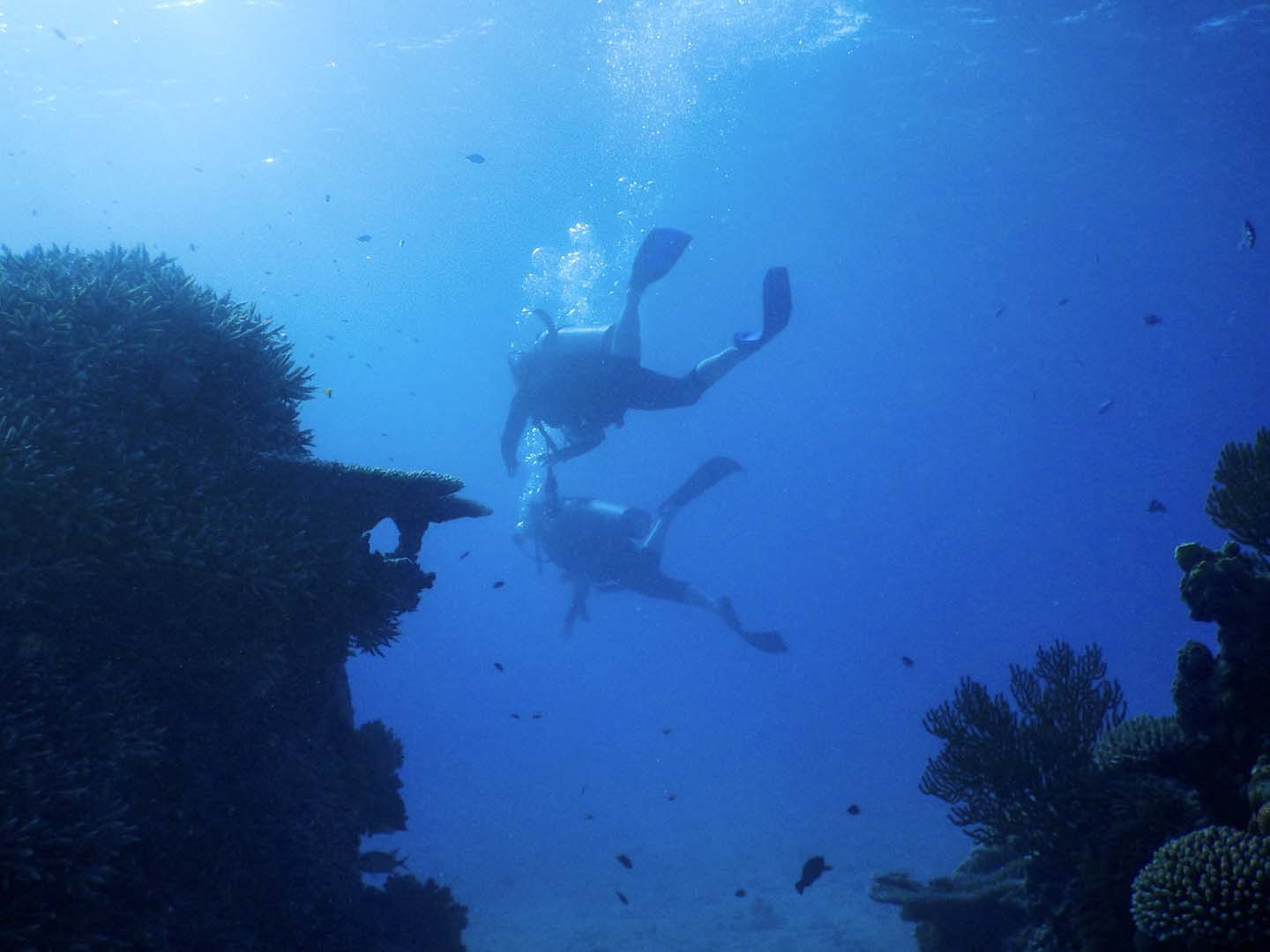 Self-guide scuba diving in the Great Barrier Reef