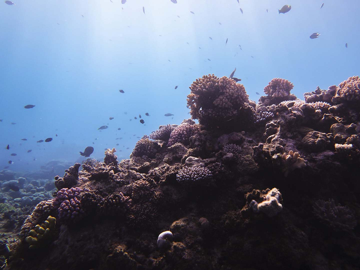 Corals in the Great Barrier Reef