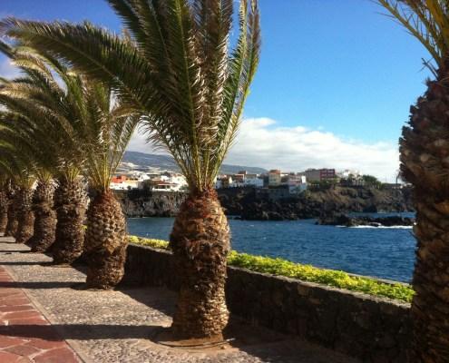 Promenade under the palm trees