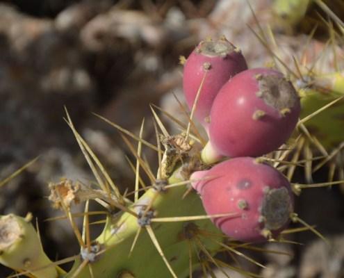 exotic fruits in tenerife