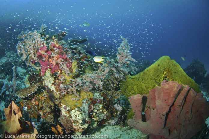 Diving Holidays Indonesia Dive Holiday Experts Diverse Travel Uk