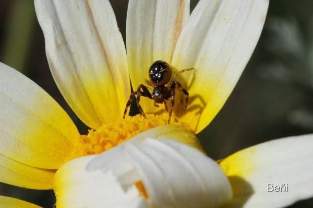 aracnido sobre una flor
