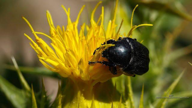 fondo de pantalla o wallpaper insecto escarabajo y flor