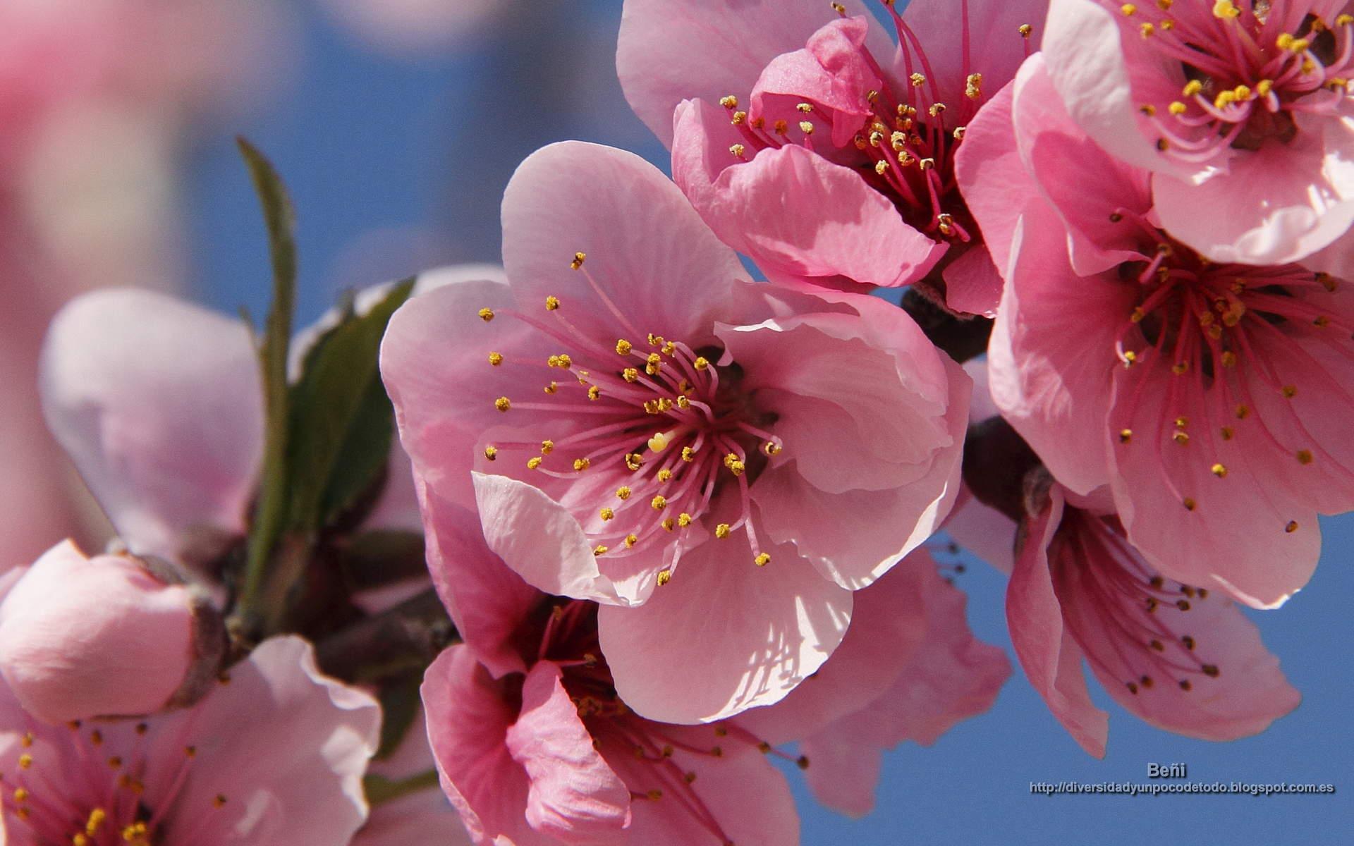 Descargar Fondos De Pantalla Para Pc Flores: Fondos De Pantalla O Wallpapers. Naturaleza: Flores, La