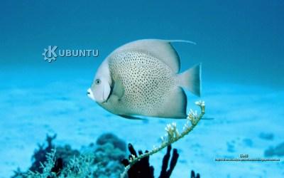 fondo de pantalla para kubuntu