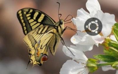 https://www.diversidadyunpocodetodo.com/fondos-pantalla-wallpapers-ubuntu-naturaleza-insectos-flores/