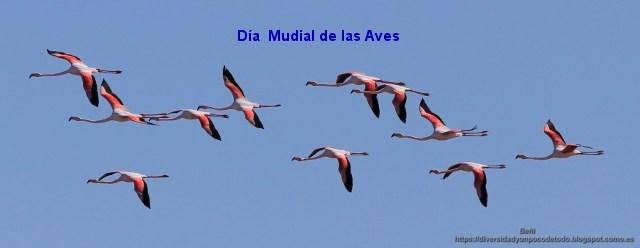flamencos rosa al vuelo