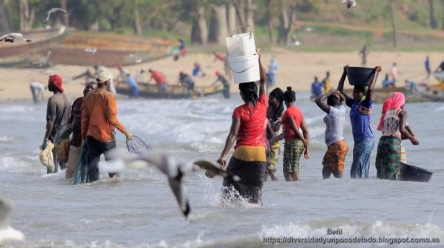 desembarco del pescado en la playa de tanji, gambia