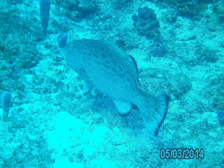 Cozumel Mexico with Diveshack USA May 2014 20