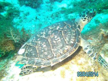 Cozumel Mexico with Diveshack USA May 2014 22