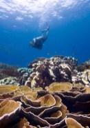 Scuba Diving in Malaysia on Tioman Island