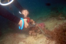 Removing net from our reef