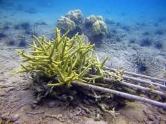 Coral Reef Nursery with B&J