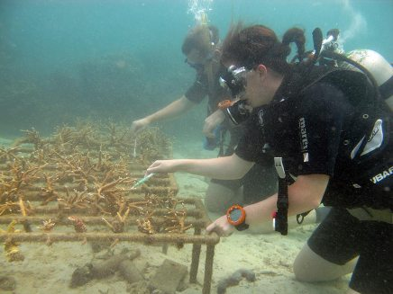 Cleaning reef nursery