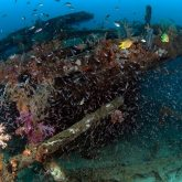 Wreck diving with B&J on Tioman Island