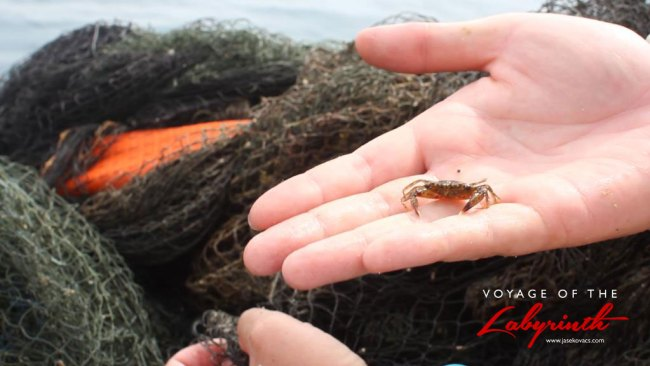Removing entangled crustaceans