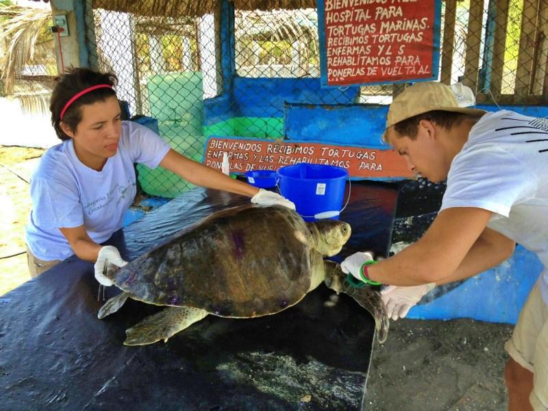 ARCAS-parque-hawaii-sea-turtle-hospital-and-hatchery-guatemala-non-profit-marine-conservation-ocean-wildlife-rescue-centre