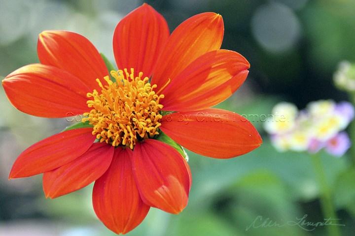 Yellow and Orange botanical flower