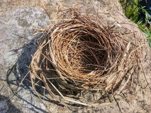 nest-834010