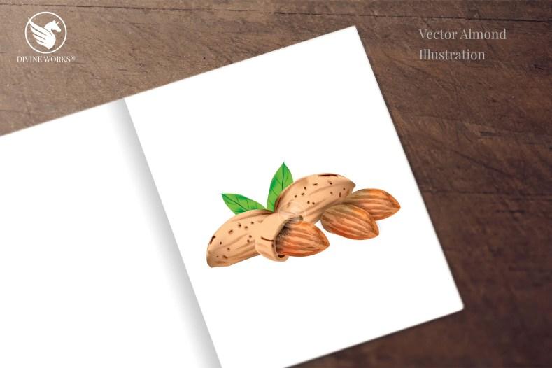 Almonds digital illustration