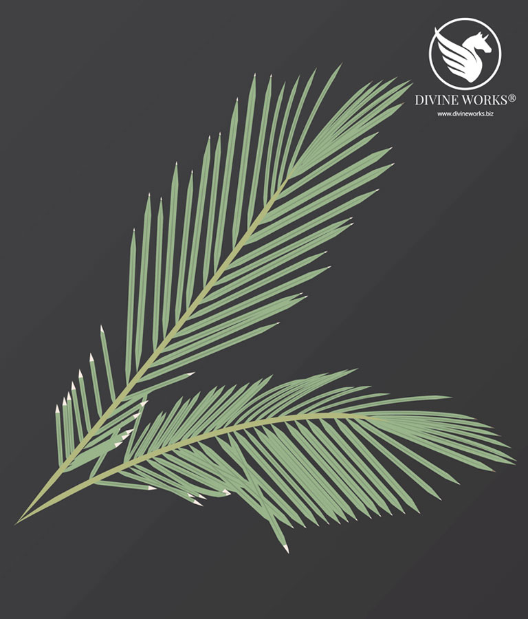 Palm Leaf Vector Illustration by Divine Works