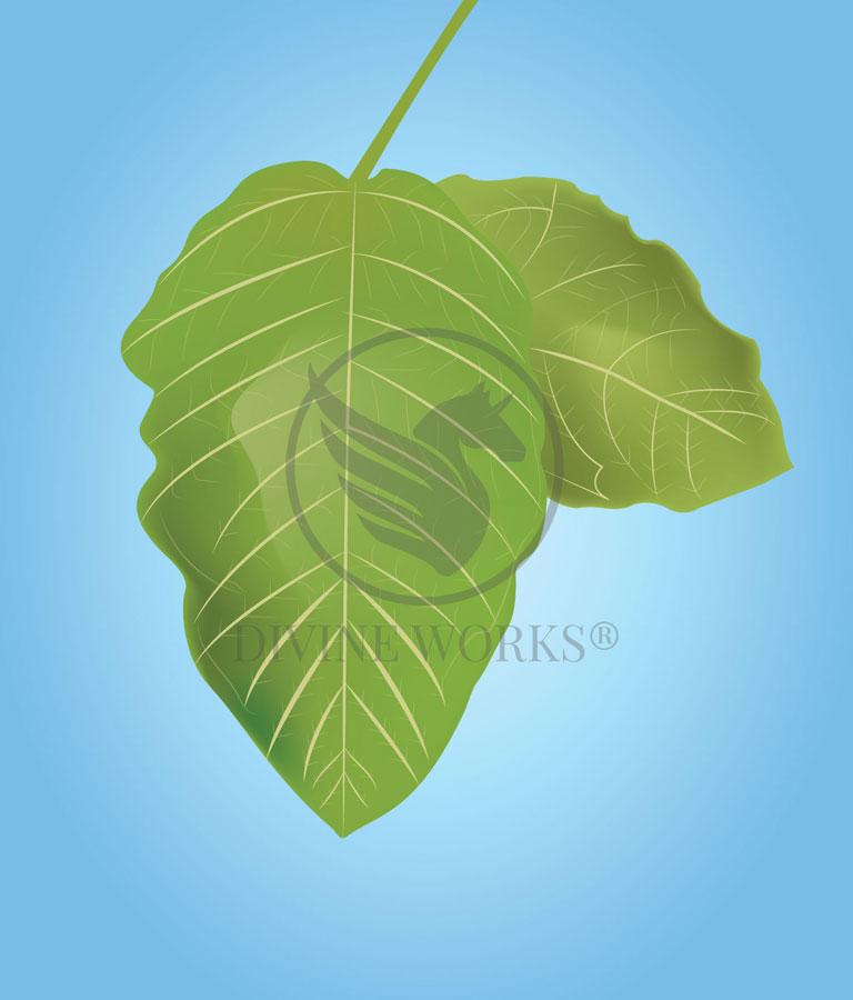 Mango Leaf Vector Illustration by Divine Works