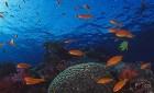 Anitas Reef – Similan Tauchplätze