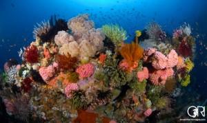 Fantastic coral scenery in Komodo
