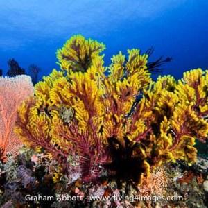 Misool Reef Scene
