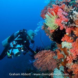 Searching On The Reef