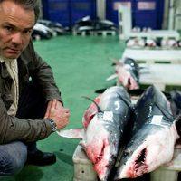 TV Tipp: Sharkproject & Hannes Jaenicke im Einsatz für Haie