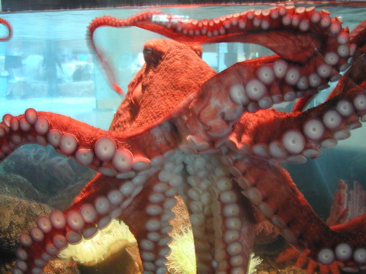 Octocam im Hatfield Marine Science Center