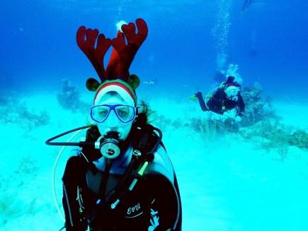 christmas_reindeer_bini2.jpg