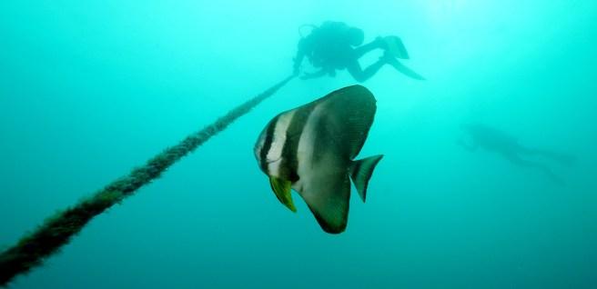 Scuba Diving in Coron, Philippines