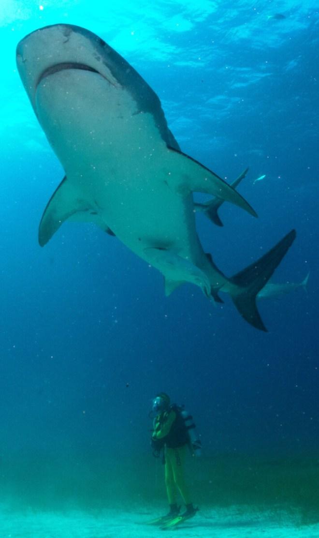 2016-dolphin-dream-biggis-161217-10-10-49