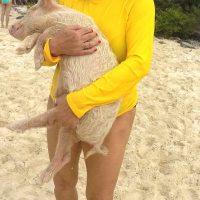 Exuma: Schwimmende Schweine (Bahamas)