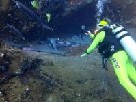 Weißspitzenhaie in Nische