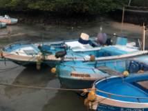 Fischmarkt in Santa Cruz