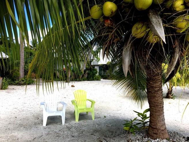 kleine und große Kokospalmen