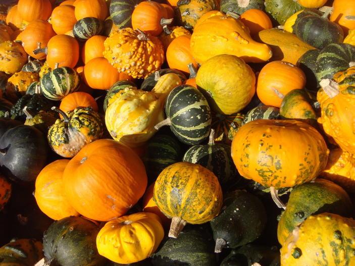 Calabazas-Halloween-nutrición