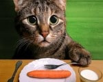 sermao jornada digital gato sermao vegetariano