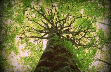 Como Encontrar a Árvore Tópica do Seu Blog