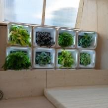 حائط الخضروات داخل المطبخ