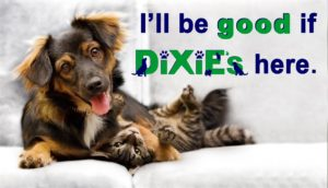 Dixie's Dog, Cat, House Sitting Services, Pet sitting for New Braunfels Texas