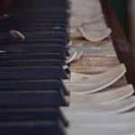 Pianodöden (5)
