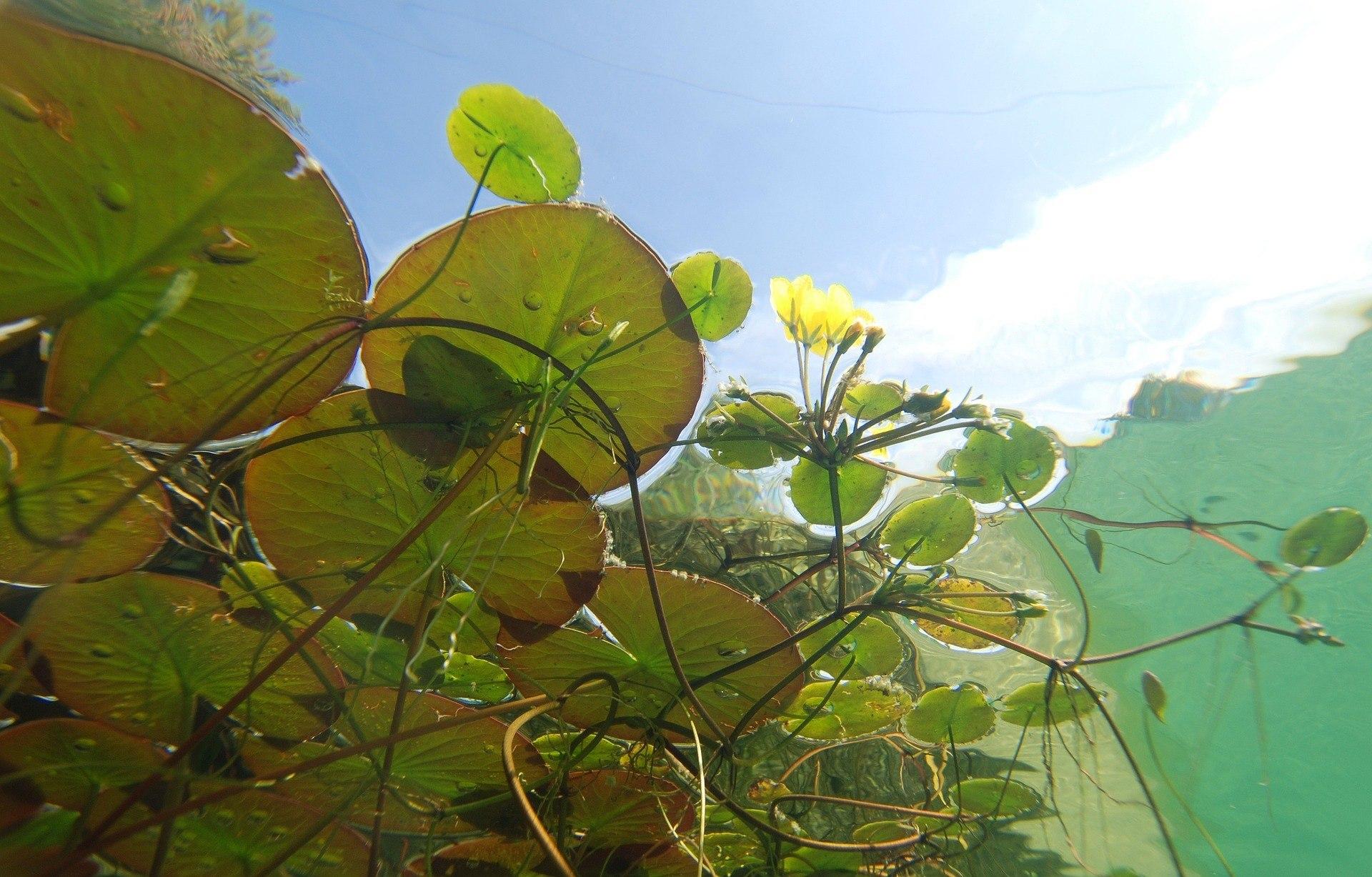 Underwater vegetation