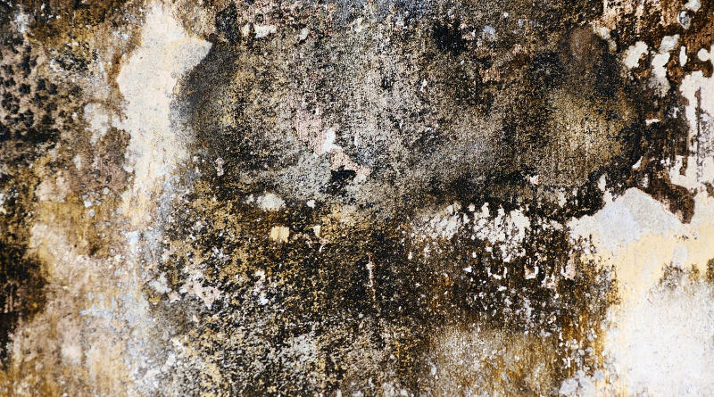 Penetrating and Rising Damp - UK DIY Projects