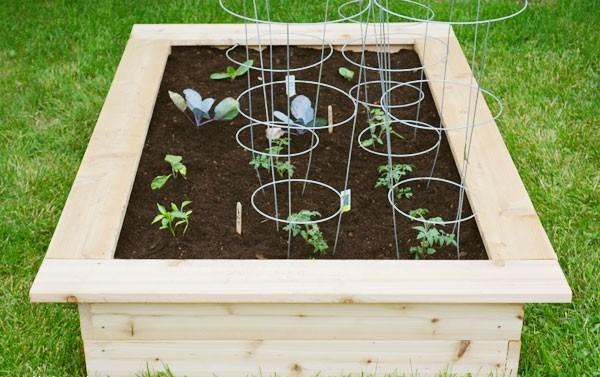 Как выращивать овощи