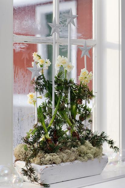 DIY Star Window Holiday Decoration